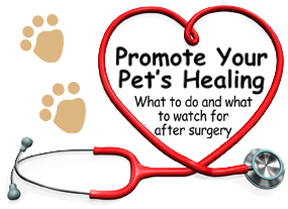 Promote Your Pet's Healing - What to do and what to watch for after surgery