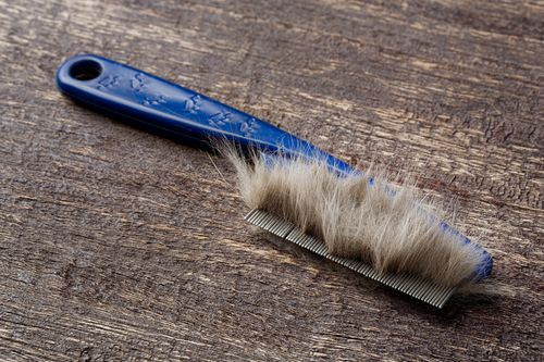 view of a brush with cat's hair