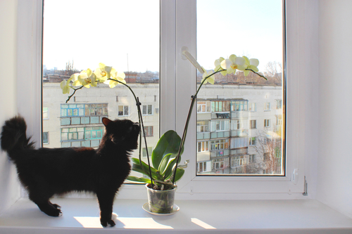cat and plant
