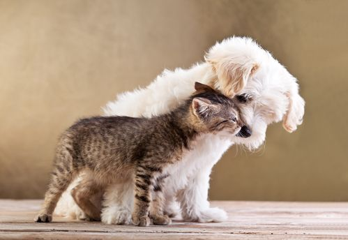 cat and a dog standing next to each other